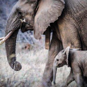 গত ৫০ বছরে হ্রাস পেয়েছে ৭০% বন্যপ্রাণ! WWF-র প্রতিবেদন জানাচ্ছে চরম ক্ষতির মুখে জীববৈচিত্র্য