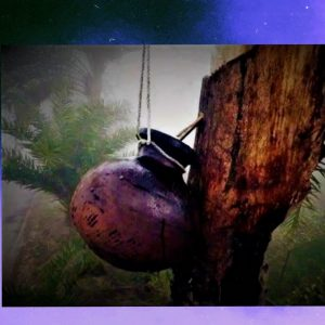 বাঙালির হেঁশেলে গুড়ের পদচারণা! গাছিদের খেজুর রস সংগ্রহ চলছে যুদ্ধকালীন তৎপরতায়