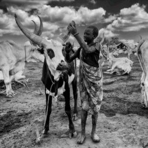 বন্দুক হাতে চলে গরু পাহারা! আফ্রিকার এই আদিবাসী গোষ্ঠীর বিস্ময়কর গরুপ্রেম!
