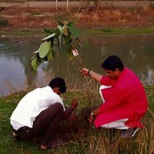 বিশ্বযুদ্ধ রুখতে পারে বট-পাকুড়! কুলিকের তীরে প্রমাণ রাখছেন বাঙালি অধ্যাপক